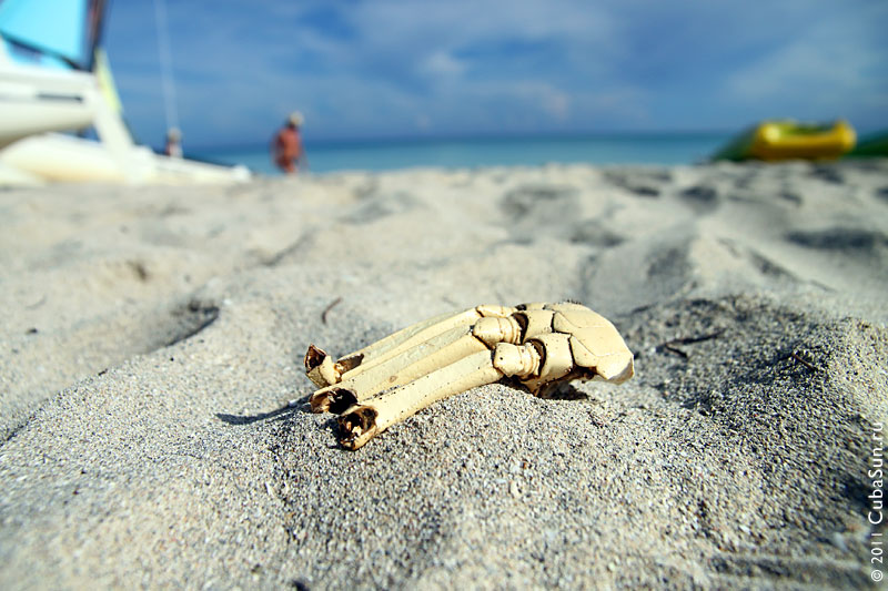 Костяная рука на пляже отеля Аренас Дорадас.