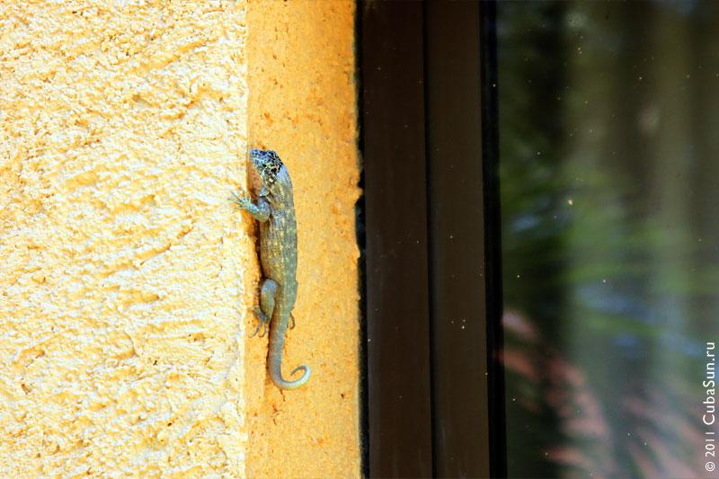 Ящерица на стене.